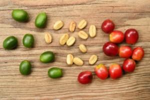 コーヒー豆を土に埋めると芽は出るの?隠れ家カフェ・クマロマは生豆だらけ!