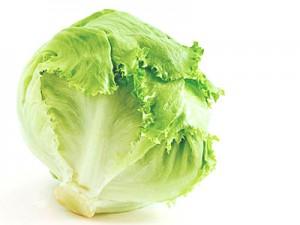 fdh_lettuce-1