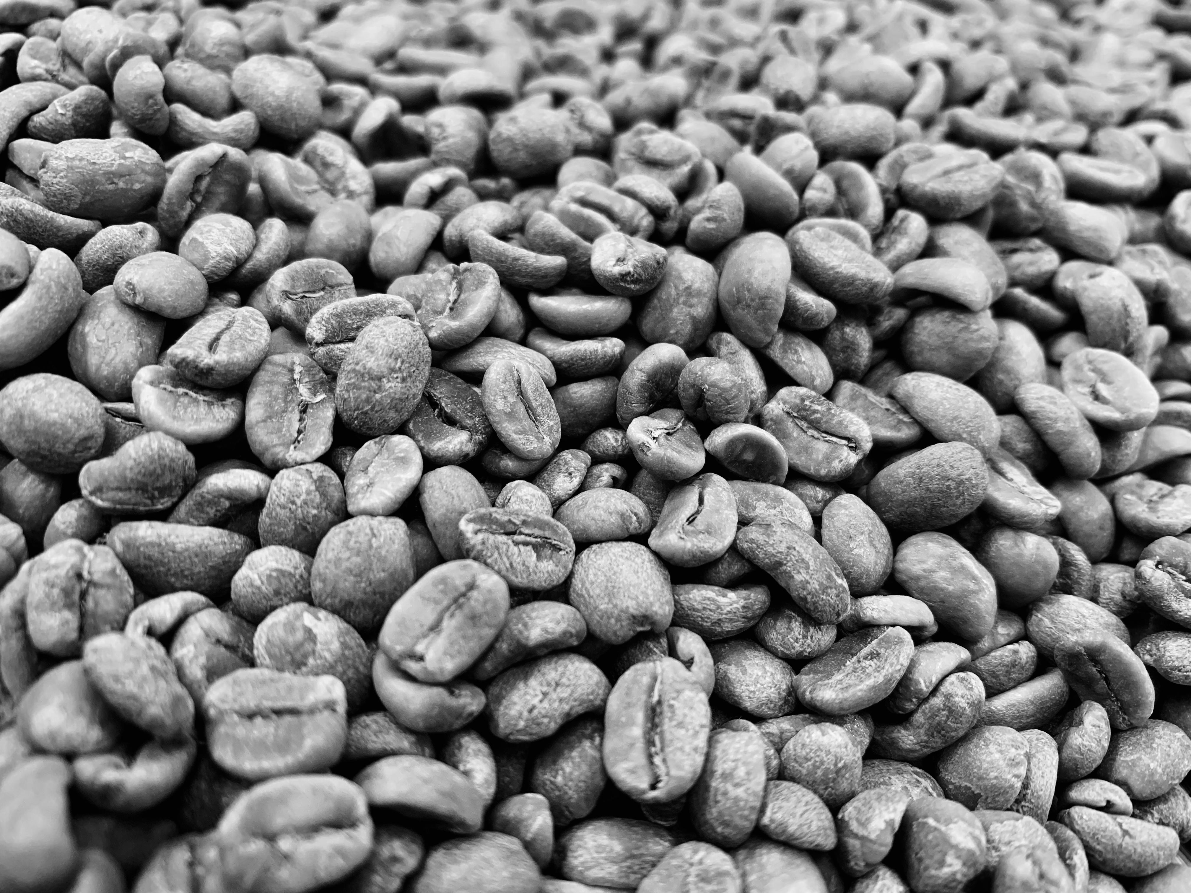 ごつごつしたコーヒー豆はやっぱり不味いのか?