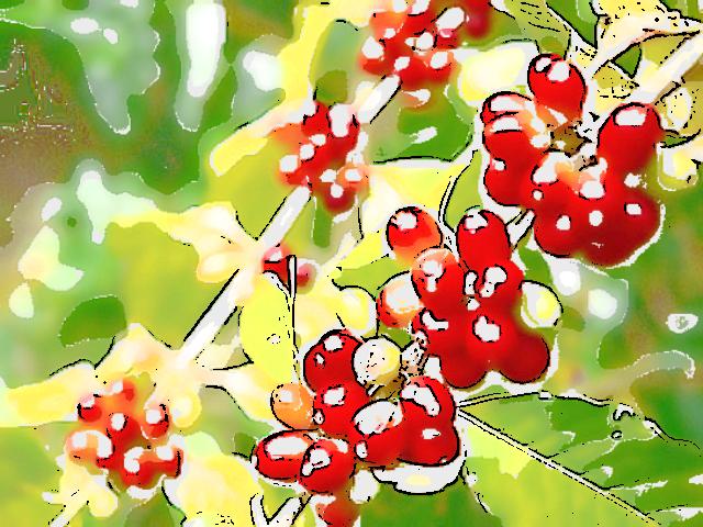 珈琲豆紹介【ブラジル ファゼンダ パッセイオ 】カカオとオレンジの香りを纏った伝統あるコーヒー豆です。