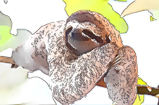【KUMAROMAの森シリーズ】「パナマの森」カツアイ・アマドール