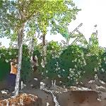 ~土壌作りから精製工程まで~「コスタリカ エル・ポトレロ農園」がつくりあげる至福の口あたり。